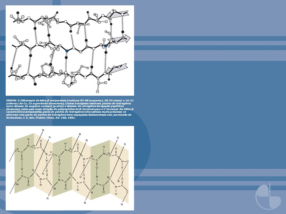 FIGURA 3.28Exemplo de folha-β antiparalela [resíduos 93-98 (superior), 28-33 (meio) e 16-21 (inferior) da Cu, Zn superóxido dismutase).